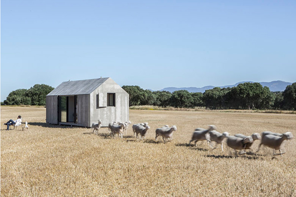 sheep and micro house