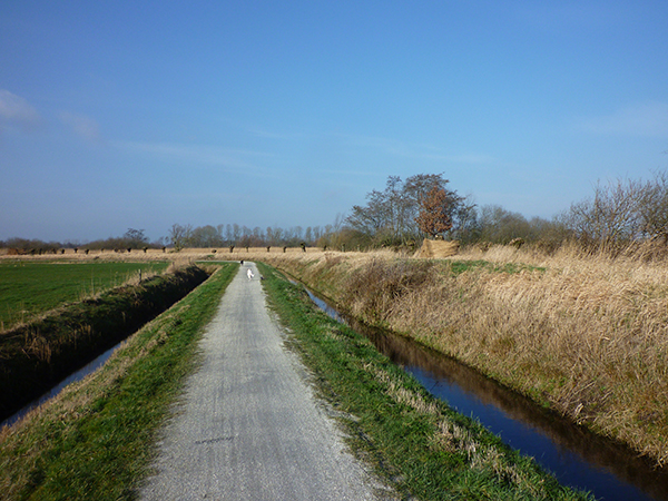 Walking the dogs in a typical Dutch landscape