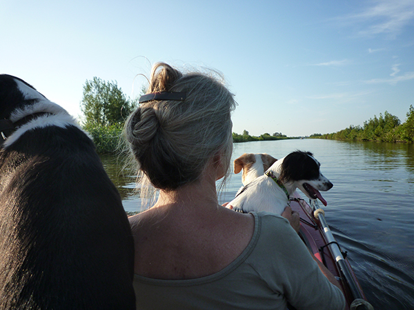 A canoe trip with 3 dogs!