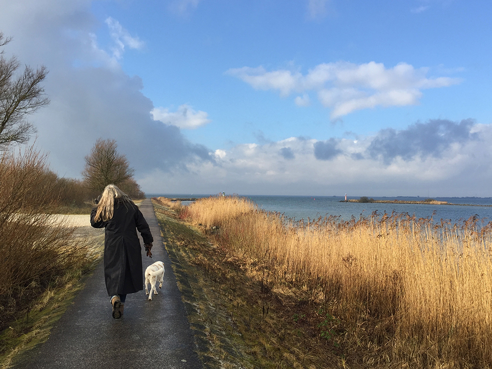 Walking with the dogs along the IJsselmeer, The Netherlands