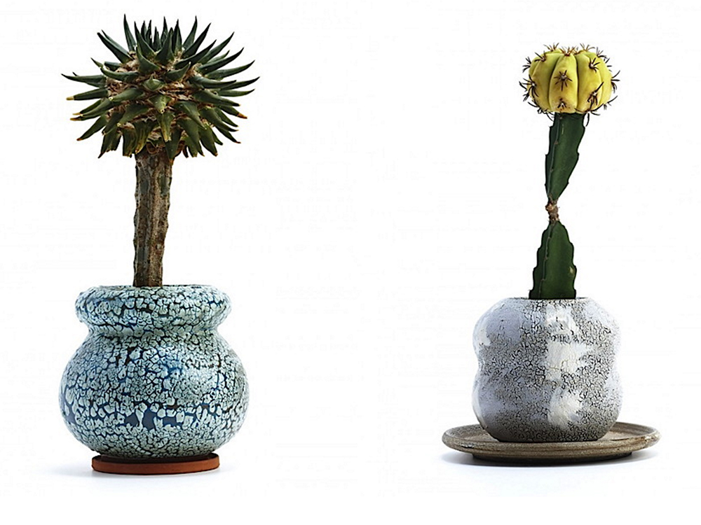 Cacti and succulents in fine ceramic pots