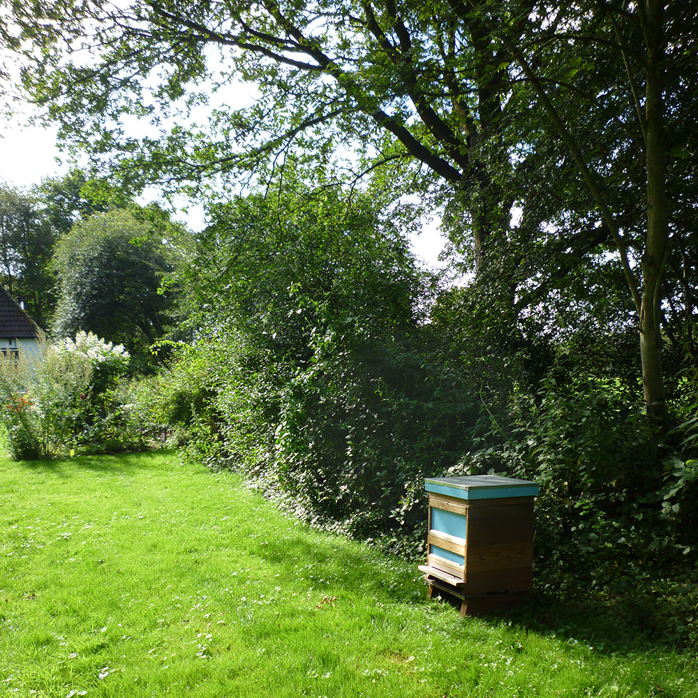 A beehive in the garden and a vanilla cake